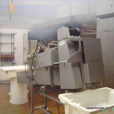 Schlachtmachine bis zu 2500 Forellen pro Stunde ohne Kiemen! Wir machen Ihnen ein intressantes Angebot!
