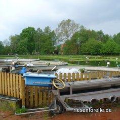 Eine von Zwei Fischsortiermachinen