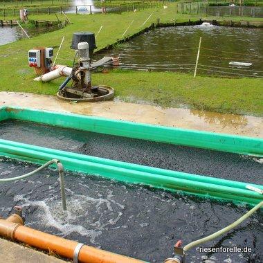 Biofilter der hinteren Teichanlage