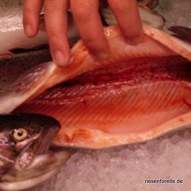 Lachsfarbenes Fischfleisch das Qualitätsmerkmal der Lachsforellen