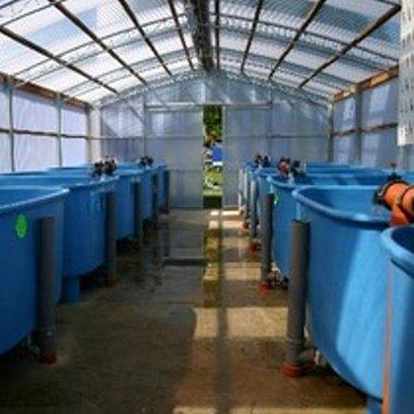 Unser Verkaufshalle für Biotop und Kaltwasserzierfische